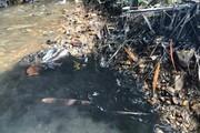 Sự cố nước sông Đà nhiễm dầu thải: Hà Nội thành lập trung tâm giám sát hệ thống nước sạch