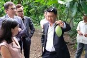"""""""Bắt tay"""" với đối tác ngoại, rau quả rộng cửa sang thị trường Hàn Quốc"""
