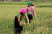 Mường La triển khai nhiều giải pháp xây dựng nông thôn mới