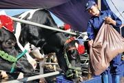 Ngành sữa đón cơ hội từ thị trường 60 tỷ USD