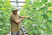 Chiêm ngưỡng nhà kính trồng rau thủy canh hiện đại ở Thủ đô