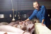 Lão nông Nguyễn Bá Hữu biến khu đầm hoang thành trang trại tiền tỷ