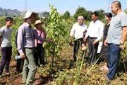 Sản xuất nông nghiệp thích ứng với biến đổi khí hậu