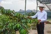 Mô hình trồng cây ăn quả trong chậu hiệu quả