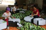 Mường La chú trọng tiêu chí thu nhập trong xây dựng nông thôn mới