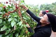 Gỡ khó từ chọn nghề đào tạo cho lao động nông thôn