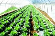 Nông nghiệp Hà Giang hướng tới sản xuất hàng hóa