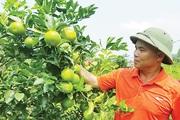 """Chàng 7X xứ Lạng hé lộ bí quyết trồng cam """"có một không hai"""""""