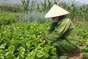 Yên Châu đào tạo chủ nhân nông thôn mới