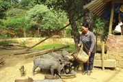 Người phụ nữ điển hình trồng rừng và nuôi heo ở Trường Sơn xứ Quảng