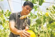 Thành tựu 10 năm nông thôn mới xứ Thanh