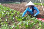 Thành phố Lai Châu hoàn thành chương trình xây dựng nông thôn mới