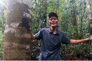 Để rừng lim trăm năm xanh mãi