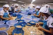Khắc phục hạn chế về chế biến sâu để nâng tầm nông sản Việt