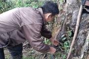 Chàng trai Mông bắt chuột rừng béo nung núc trên đỉnh Kỳ Quan San