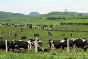 Cơ cấu cổ đông Sữa Mộc Châu biến động liên tục