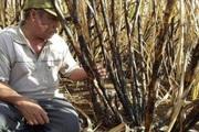 Philippines, Indonesia cứu ngành đường thế nào trước ATIGA?