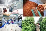 """""""Tái định vị"""" để khai thác hiệu quả thị trường Trung Quốc"""