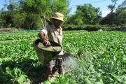 Bình Triều xây dựng rau sạch thành sản phẩm OCOP đặc trưng
