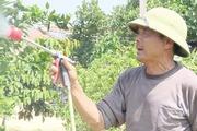 Mô hình trang trại tổng hợp trồng trọt kết hợp với chăn nuôi an toàn sinh học hiệu quả cao