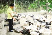 Chàng cử nhân về quê khởi nghiệp xây nhà lầu cho gà
