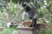 Thu mật ong mùa nghịch, dân Vân Thủy kiếm bộn tiền