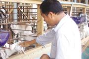 Chuyện một con dê của tỷ phú Hai Hồng nổi tiếng Gò Công