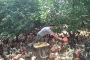 Bàn giải pháp giúp nông dân tiêu thụ nông sản