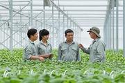Vì sao các đại gia bất động sản đua nhay nhảy vào lĩnh vực nông nghiệp?