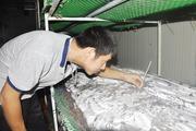Triệu phú nấm rơm 4.0 ở Bắc Ninh