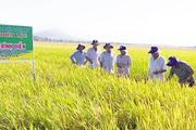 Hiệu quả nguồn Quỹ Hỗ trợ nông dân ở Khánh Hòa