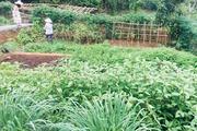 Hà Nội rộ mô hình cho thuê đất trồng rau phục vụ bữa ăn gia đình