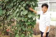 HTX trồng dược liệu nơi cổng trời Quản Bạ