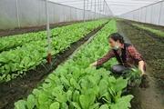 Nông nghiệp 4.0 gặp khó vì thủ tục đất đai