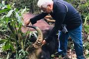 Phát hiện xác bò tót nặng khoảng 800kg trong Khu bảo tồn ở Đồng Nai
