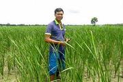 """Chuyện vui của """"xóm trồng bồn bồn"""" ở Vĩnh Long"""