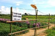 Chuyện lạ trồng rau cải ngắm hoa, có thêm 20 triệu đồng/tháng
