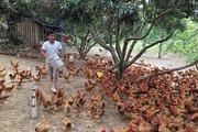 Triển khai chăn nuôi gà an toàn sinh học