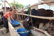 Hội Nông dân Thuận Châu: Làm tốt các hoạt động tư vấn, hỗ trợ, dạy nghề cho nông dân