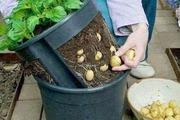 Mách bạn cách trồng rau nhà phố xanh, sạch ngon và... rẻ