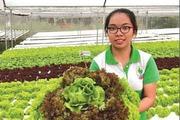 Mô hình trang trại rau thủy canh làm du lịch