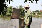 Mô hình nuôi cá, trồng nhãn kiếm nửa tỷ đồng mỗi năm
