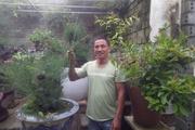 Làm giàu từ mô hình sản xuất đất sạch kết hợp trồng cây cảnh