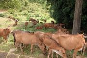 Hội Nông dân Nậm Pồ làm tốt hoạt động dịch vụ, tư vấn, hỗ trợ nông dân