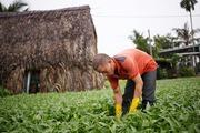 Đất nông nghiệp ... teo tóp dần