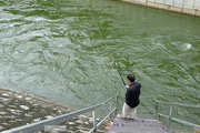 Clip cần thủ thỏa sức buông câu bắt cá trên dòng Tô Lịch xanh