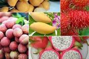 Thiếu chuỗi giá trị, trái cây Việt Nam khó xuất khẩu