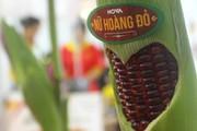 Giống bắp đỏ ăn sống, 25.000 đồng/bắp vẫn tấp nập người mua