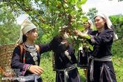 Tuyên Quang: Nông sản sạch khẳng định giá trị