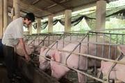 Giá thịt lợn cứ cao quá, người tiêu dùng quay lưng không ăn nữa